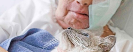Animal Assisted Therapy cat and hospital patient looking loving at each other